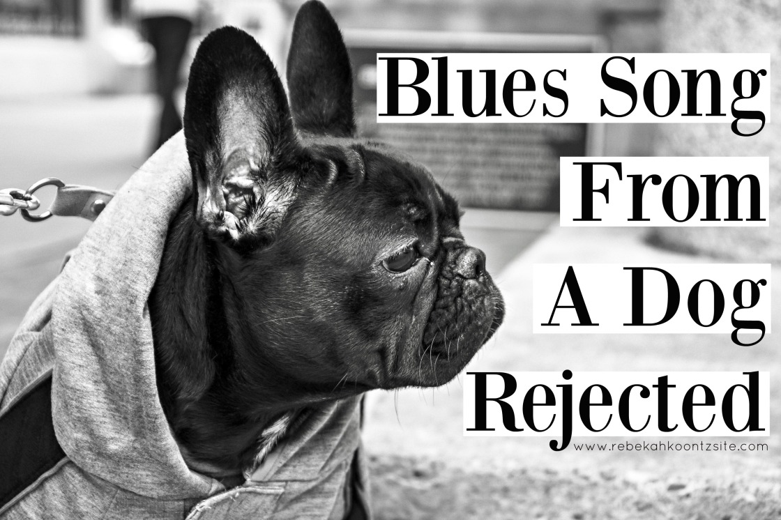 blues-song-from-a-dog-rejected-humor-rebekah-koontz-site-funny-pet-humor