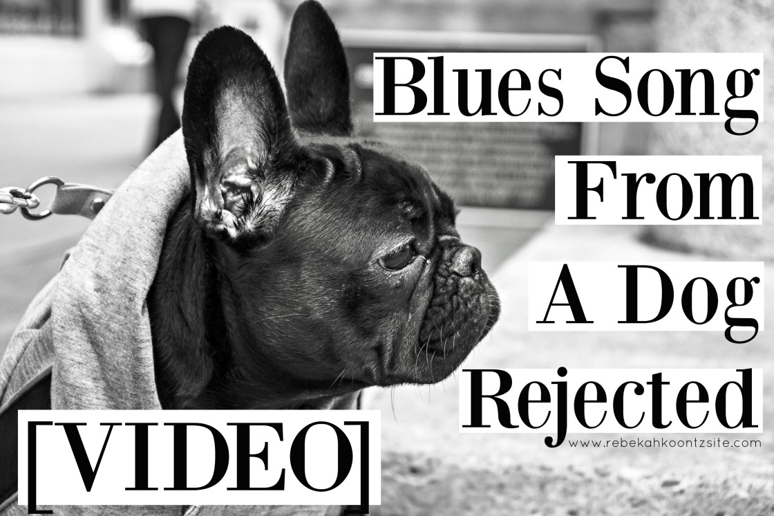 1-video-blues-song-from-a-dog-rejected-humor-rebekah-koontz-site-funny-pet-humor
